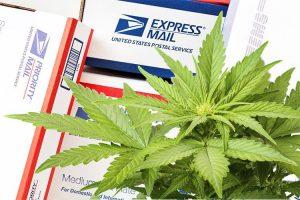 USPS Hemp CBD Cannabis