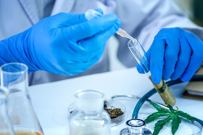 cannabis research Covid-19