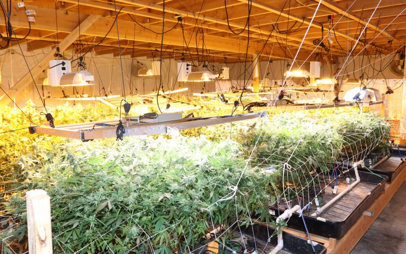 Las Vegas Marijuana bust