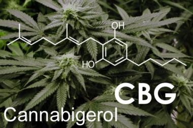 Cannabigerol CBG