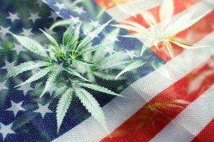 2021 Election marijuana legalization
