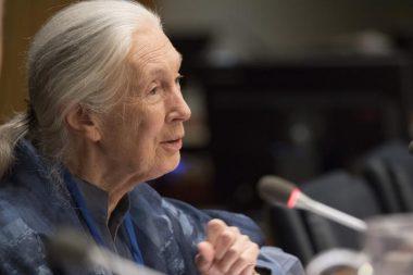 Jane Goodall CBD