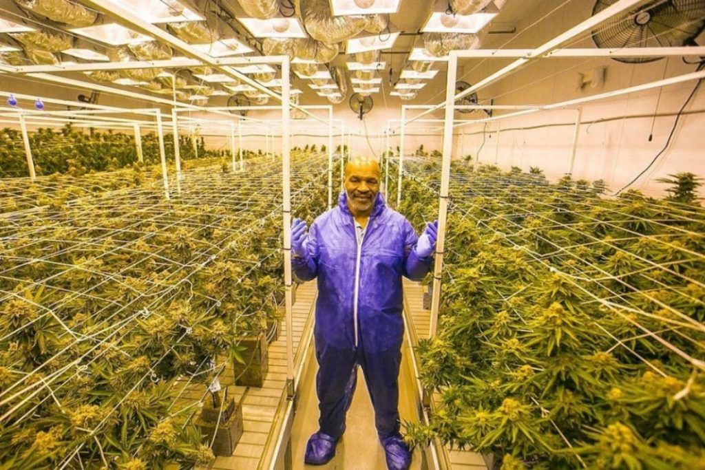 Mike Tyson Cannabis business