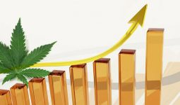 Cannabis Sales report