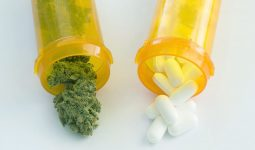 Marijuana helps reduce opioid usage
